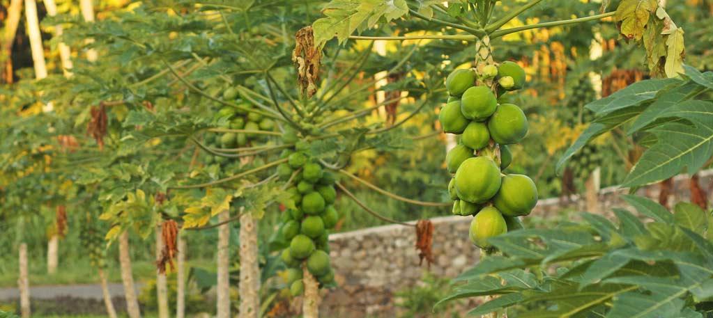 Holiday Accommodation Samoaifieleele Plantation Luxury